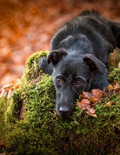 """Encadré par la mousse - Photo prise pendant le Workshop """"Authentic Dog Portraiture Scotland 2018"""" organisé par Alice Loder"""