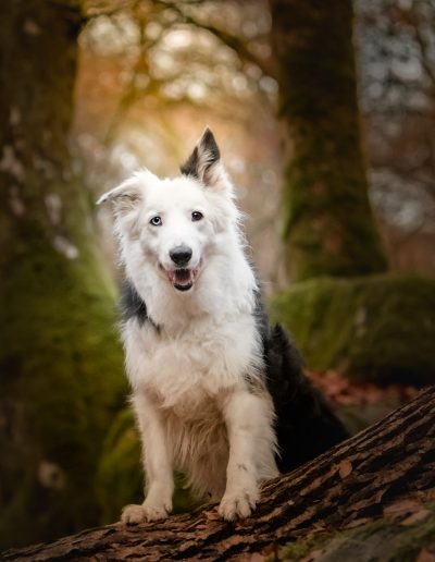"Portrait sur le tronc - Photo prise pendant le Workshop ""Authentic Dog Portraiture Scotland 2018"" organisé par Alice Loder"