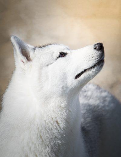 Portrait nordique