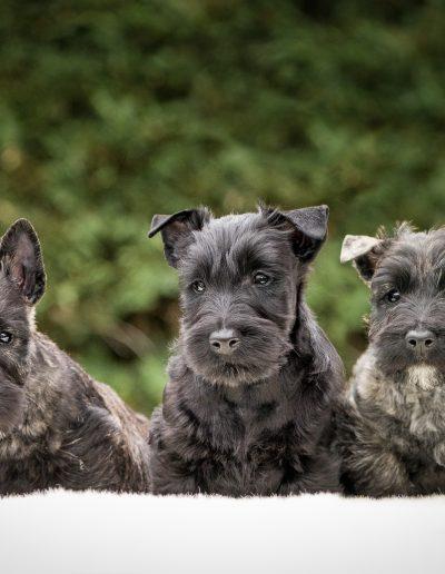 Trio écossais